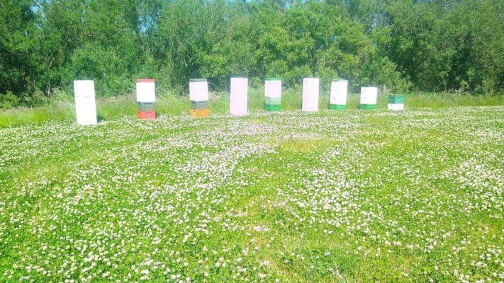Bier på hvidkløver honning